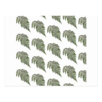 Lacey fern background postcard