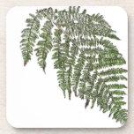 Lacey fern coasters