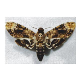 Lachesis del Acherontia de Hawkmoth de la cabeza d Impresiones En Lona
