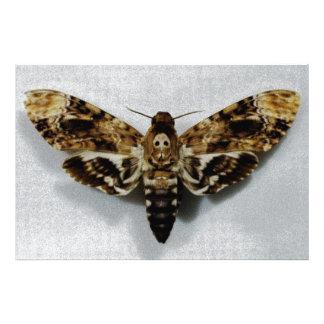 Lachesis del Acherontia de Hawkmoth de la cabeza d Foto
