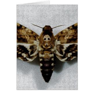 Lachesis del Acherontia de Hawkmoth de la cabeza d Tarjetas
