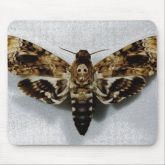 Lachesis del Acherontia de Hawkmoth de la cabeza Mousepad