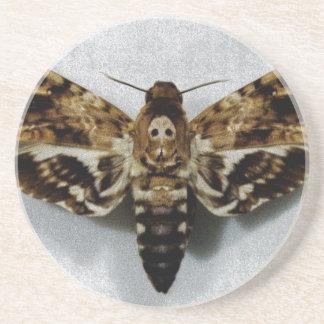Lachesis del Acherontia de Hawkmoth de la cabeza Posavasos De Arenisca