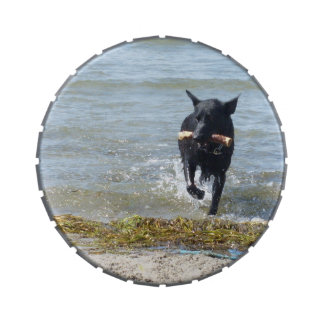 Lacquer Black German Shepherd at the Beach Candy Tin