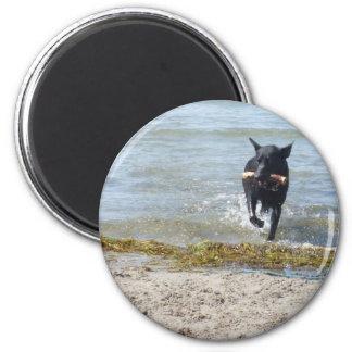 Lacquer Black German Shepherd Refrigerator Magnet