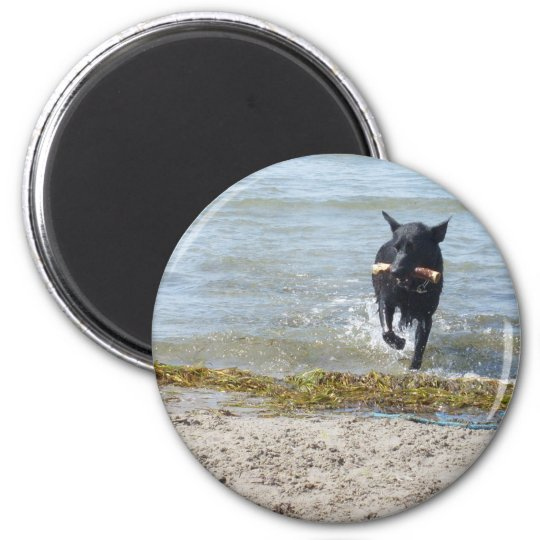 Lacquer Black German Shepherd Magnet