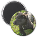 Lacquer Black German Shepherd Magnet
