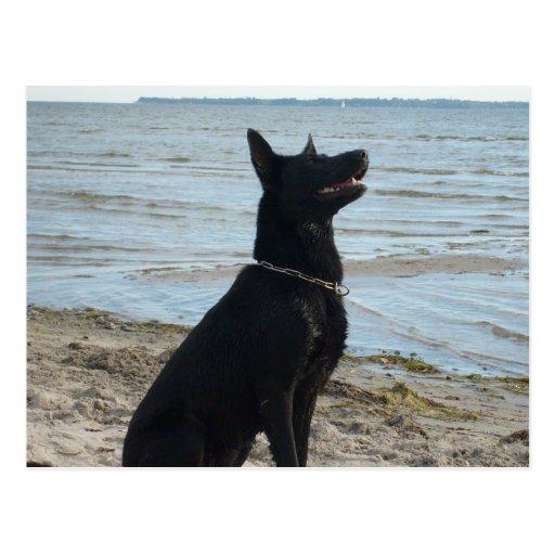 Lacquer Black German Shepherd Post Card
