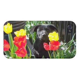 Lacquer Black German Shepherd Puppy iPhone 4/4S Case