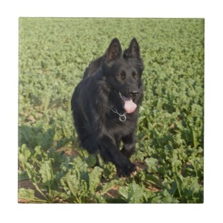 Lacquer Black German Shepherd Small Square Tile