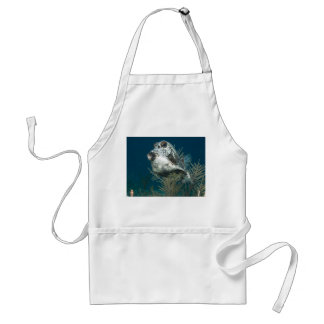 Lactophrys triqueter - Smooth Trunkfish Adult Apron
