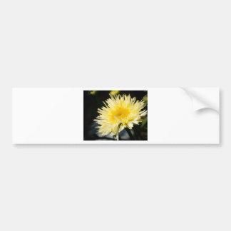 Lacy Daisy Bumper Sticker