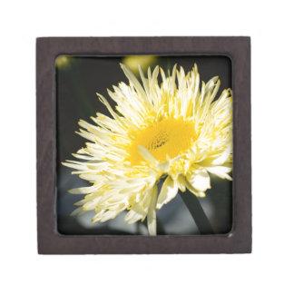 Lacy Daisy Premium Keepsake Box