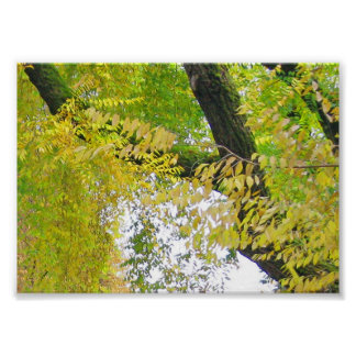 Lacy Leaves of Autumn Poster