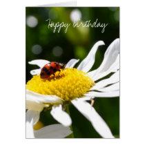 Ladbybug and Daisies Card