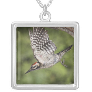 Ladder-backed Woodpecker, Picoides scalaris, Square Pendant Necklace