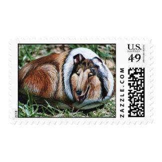 Laddie dog rock stamp