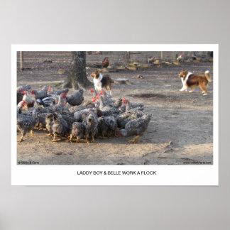 Laddy Boy & Belle Work A Flock Poster