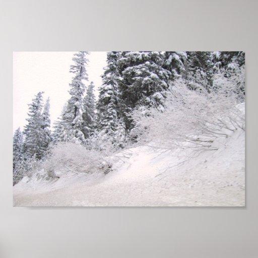 Ladera con los árboles de pino cubiertos con nieve poster