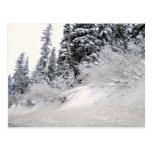 Ladera con los árboles de pino cubiertos con nieve tarjeta postal