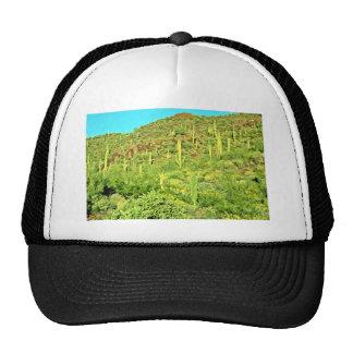 Ladera del Saguaro, plantas, rocas rojas Gorro De Camionero