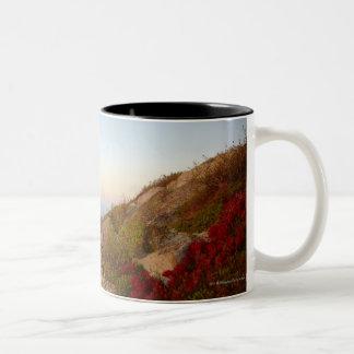 Ladera rocosa, flores rojas, parque nacional del taza de dos tonos