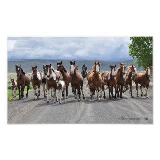 Ladies of the Rodeo Photo Print