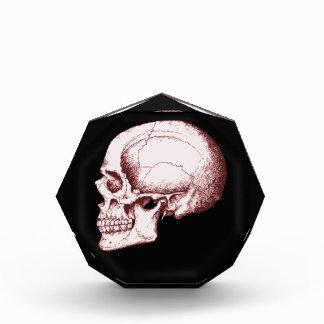 Lado humano rojo oscuro del cráneo