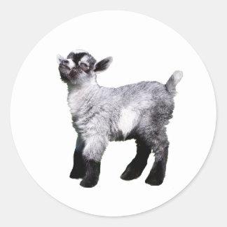 lado izquierdo de la cabra del bebé pegatina redonda