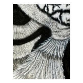 lado izquierdo del ojo del búho tarjetas postales