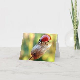 Ladtbug card