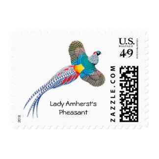 Lady Amherst Pheasant Postage