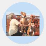 Lady and Sammy - Vizsla Photo-04 Classic Round Sticker