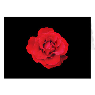 Lady Boo Red Rose Note Card