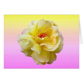 Lady Boo Yellow Rose Note Card