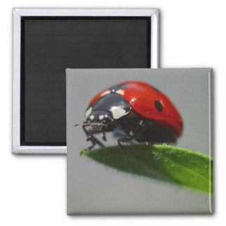 lady bug 2 inch square magnet
