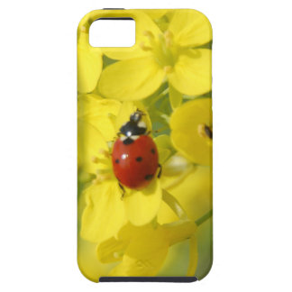 Lady Bug iPhone 5 Cases