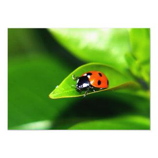 Lady Bug On A Leaf Card