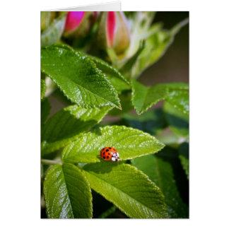Lady bug on a leaf greeting card