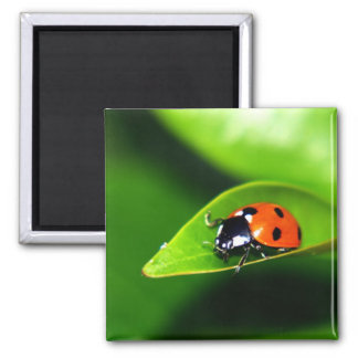 Lady Bug On A Leaf Magnet