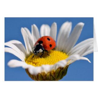 Lady bug on daisy card