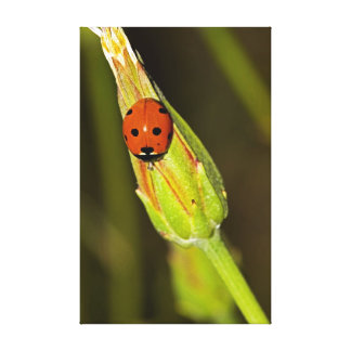 Lady Bug on Flower Bud Canvas Print