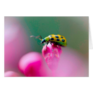 Lady Bug on Pink Flower Greeting Card