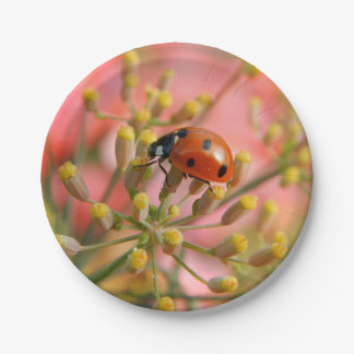 Lady Bug Paper Plate
