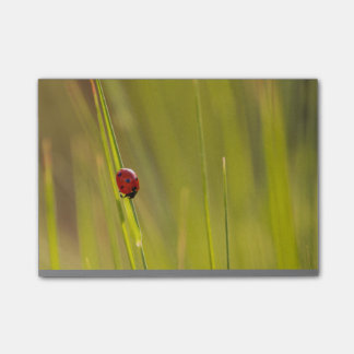 Lady Bug Post-it Post-it® Notes
