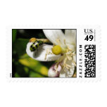 LADY BUG POSTAGE STAMPS