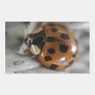 Lady Bug Rectangular Sticker