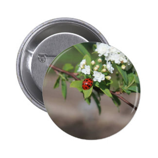 Lady Bug resting near so white flowers in bloom Button