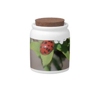 Lady Bug resting near so white flowers in bloom Candy Jar