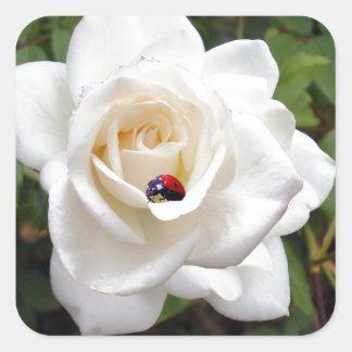 Lady_Bug_Rose, _ Calcomanía Cuadradase